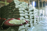 Bihar food corp ends up with chaff as rice worth Rs 535 cr vanishes from mills